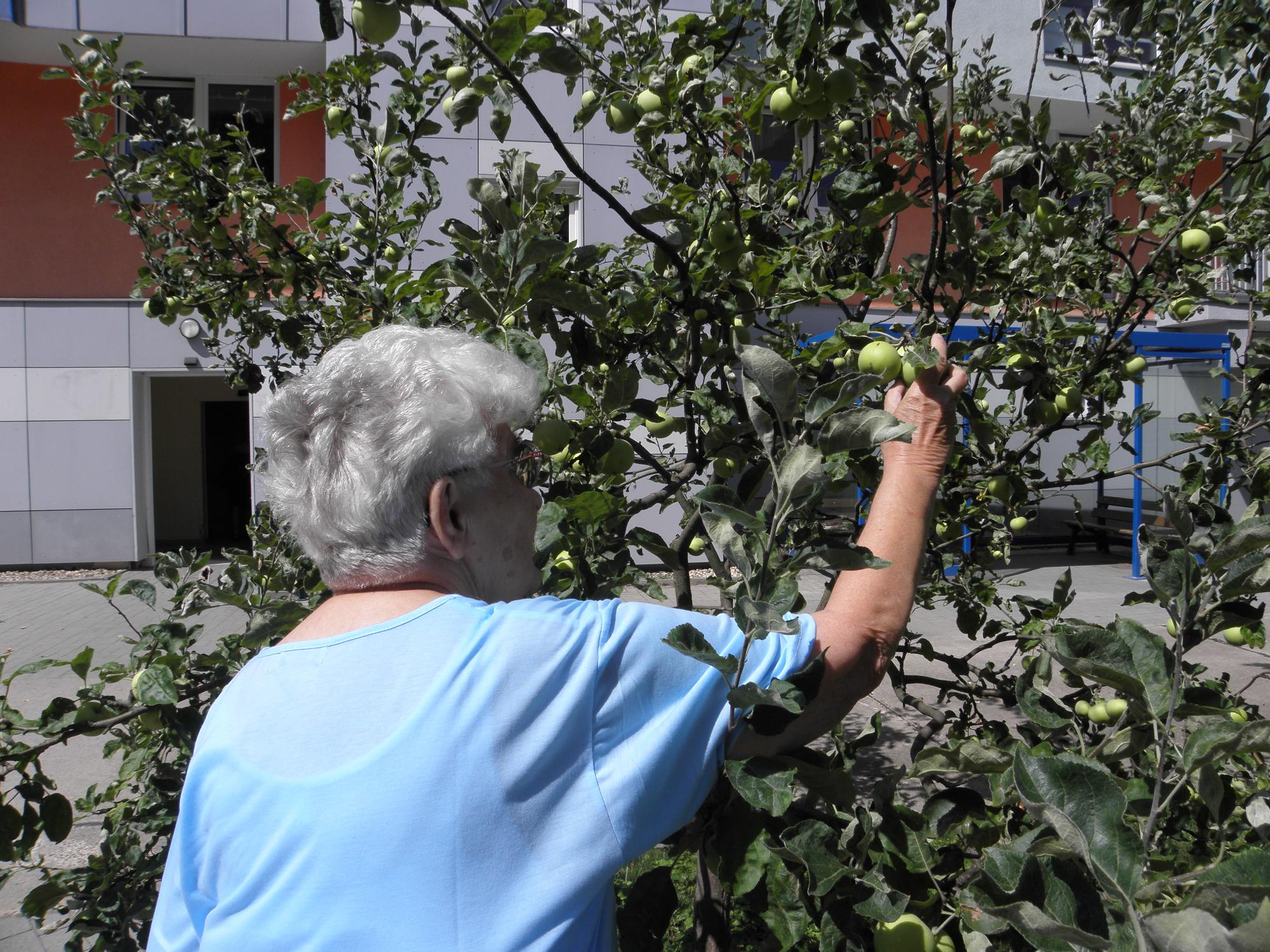 äpfel Pflücken Berlin : tagespflege evergreen in berlin kaulsdorf auf wohnen im ~ Lizthompson.info Haus und Dekorationen